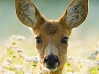 a slight obsession with DEER