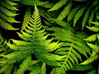 Green is nature. Some of my favorites: moss, ferns, moss covered rocks by streams, lush foliage.