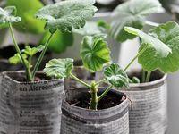 Gardening Utopia