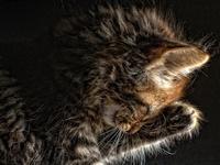 Purrrrrfect Kitties =^..^=