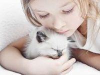 Friends - Feline Sweethearts