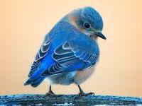 Bird  ♥•レo√乇♥