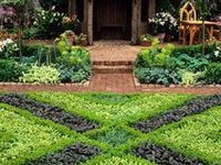 The magic of the herb garden