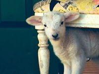 1+ 2+ 3+ = SHEEP!  :)
