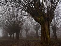 Tree Magic...