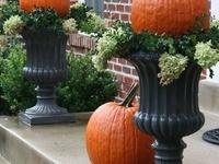 Autumn - Recipes & Ideas