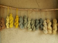 Fiber and Spinning
