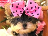 """""""Happiness is a warm puppy."""" ― Charles M. Schulz"""