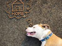 Shelter Dog Photo Ideas