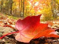 Fall....My Favorite!