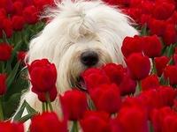 #2 Loyal Dogs