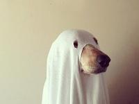 Boo... Costumes