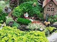 Garden - Terrarium & Dish Gardens