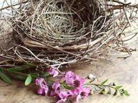 .....nests.....dwellings......habitat......
