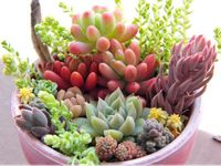 I am succulent obsessed!!  I have many many dish gardens filled with many many different kinds!!