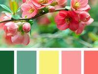 ♡ Colour Hues ♡