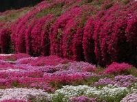 Flowers: Fields, Gardens, & Beds