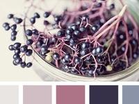 purple raiℵ