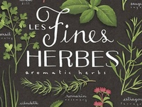 Herbs Now and Then: A View From the Past to Present Day
