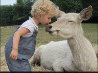 Children Love Animals 5