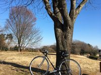 Steel Bicycle