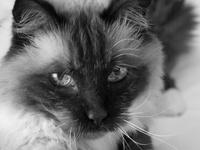 Pets Care; Health, Treats, etc.