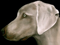 #dogs #pets #animals