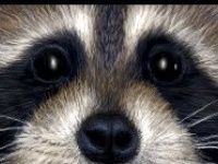 Animais de todos os tipos: insetos, quadrupedes, bípedes, mamíferos, e por aí afora! Amo animais...
