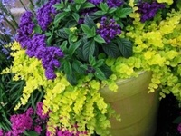 Tips, tricks, and inspirational garden containers!
