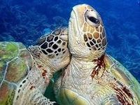 Turtles it SHELL be