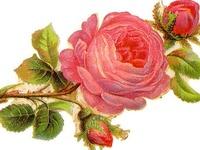 Printables ~ Vintage Floral