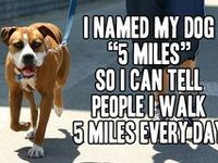 The funniest dogs and cats on the internet