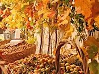 Autumn Parties