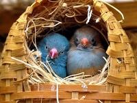 140 Best Diy Bird Menagerie Images On Pinterest The