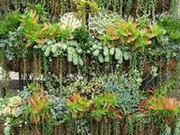 The Garden ~ Succulents