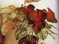 Miniature Tutorials - Flowers & Plants
