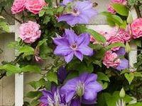 Garden Plants & Combinations