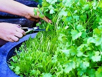 Home: Gardening Tips & Projects
