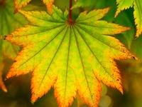 Fall for Autumn