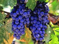 world of wine. enjoy, relax, laugh with one of natures gifts.