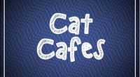 Cat Cafes / Cat cafes around the world