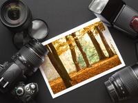 Photog Tutorial & Tips