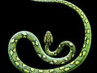 Reptiles--Snakes
