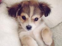 Dogs - Pejsci