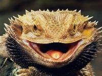 Reptiles--Lizards and Tuataras