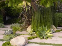 Landscaping : Cactus, succulents & Grass