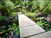 Landscaping : Pond