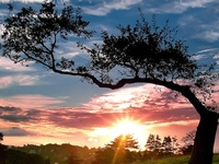 """""""Trees are poems that the earth writes upon the sky."""""""