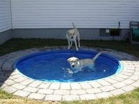 Pet friendly landscaping and yard ideas.