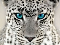 lion tiger leopard jaguar panther